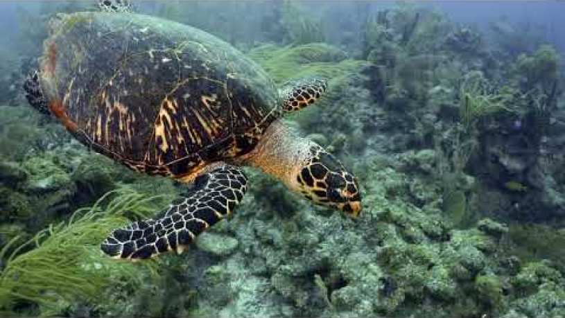 Are Green Turtle And Sea Turtle The Same