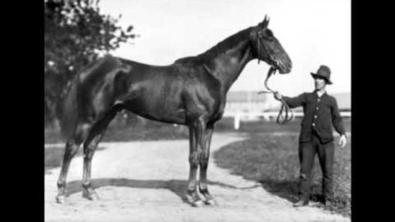 Are Man O War And Secretariat Related