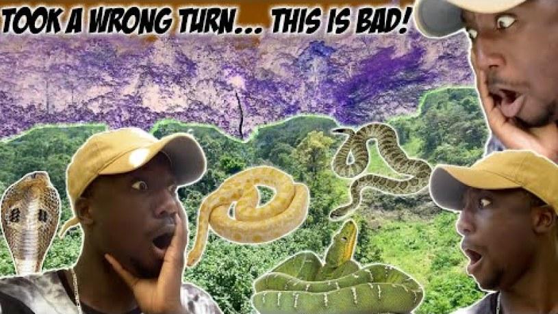 Does Tahiti Have Snakes