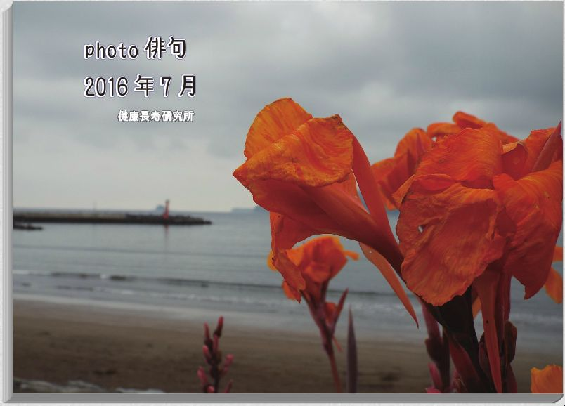 photo俳句2016年7月