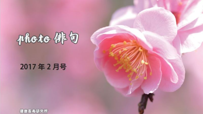 photo俳句(2017年2月号)
