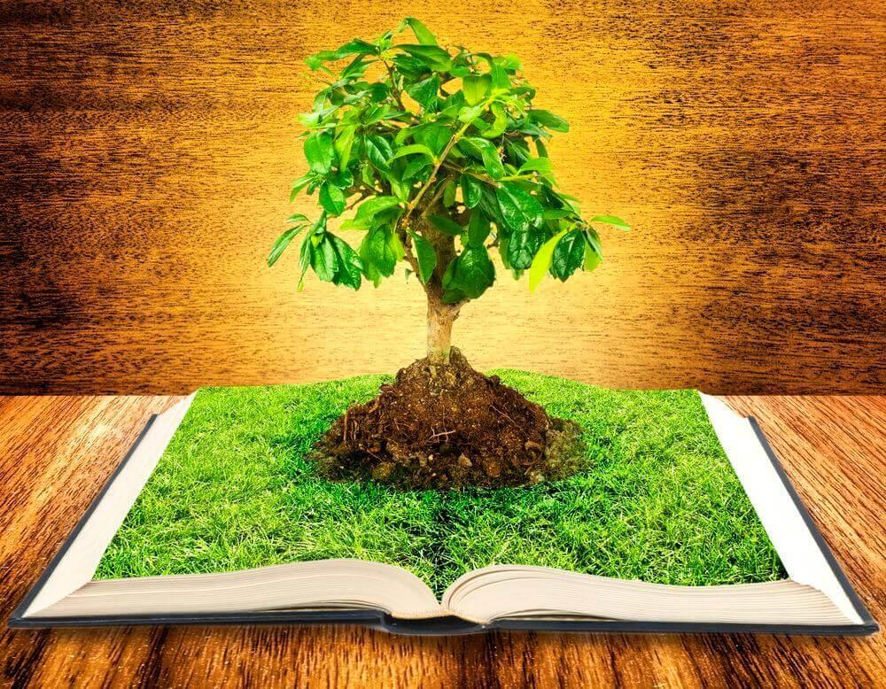 könyvből kinövő fa reiki tanfolyam oktatás háttere