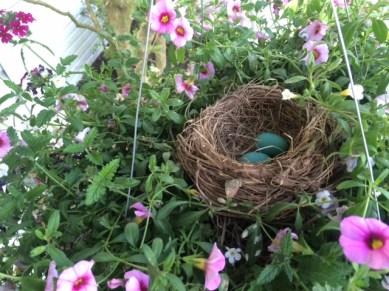 Catbird Nest