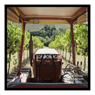 ccr_post_vendemmia_3
