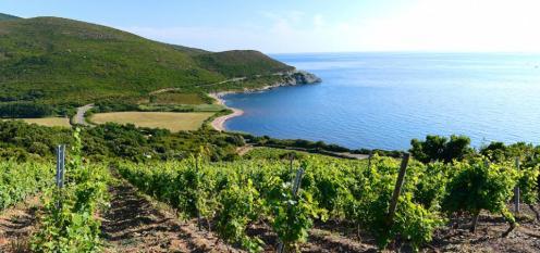 Domaine Pieretti, Credit: Vins de Corse