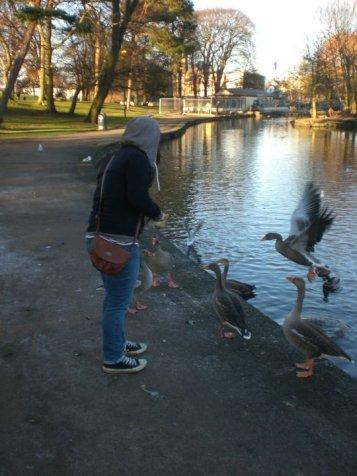 Feeding the ducks at the park!