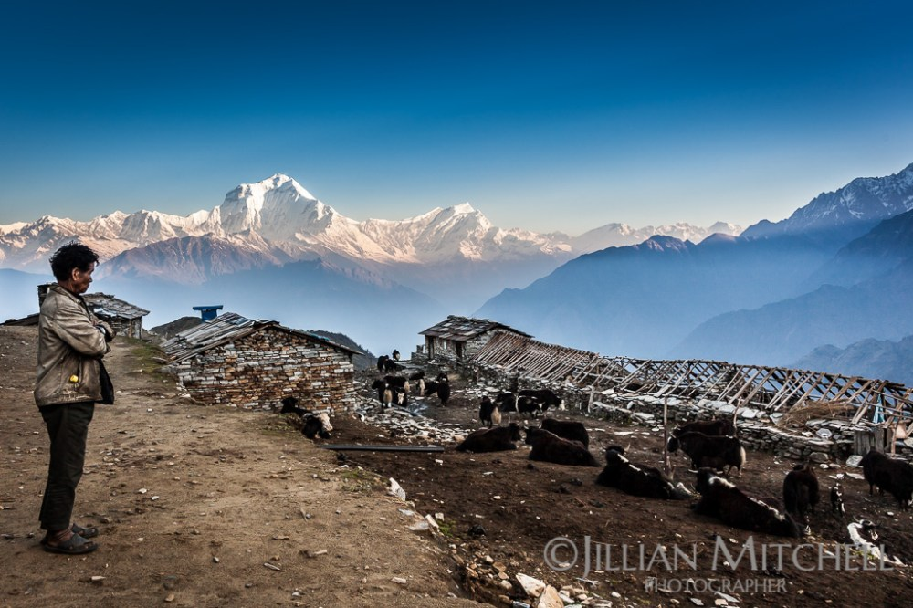 Dhaulagiri Range Views from Khopra Ridge, Annapurna, Nepal