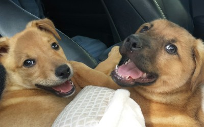 Meet The Murty's New Foster Pups, Delilah and Doughboy!