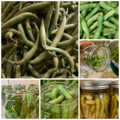 Dill Green Bean Pickles