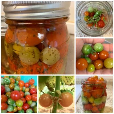 Pickled Cherry Tomatoes with Basil and Garlic