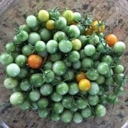 Cherry Green Tomatoes