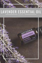 lavender doterra essential oil