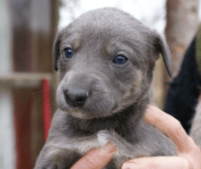 puppy low res 3