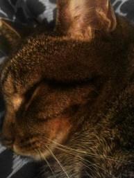 Sleepy-Face-Tiger