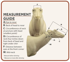 measurement-chart