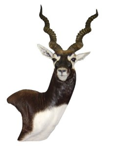 Black Buck mount by Jet Smith, AG-BB09, Pedestal, Right Turn