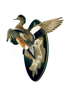 pintail mount
