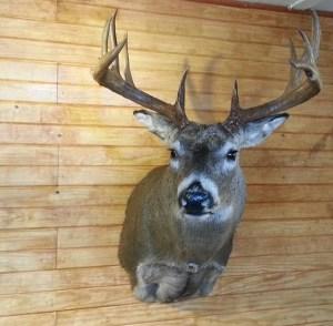 customer deer