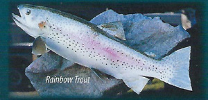 mounted rainbow