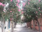 Flower lane in Chapala.