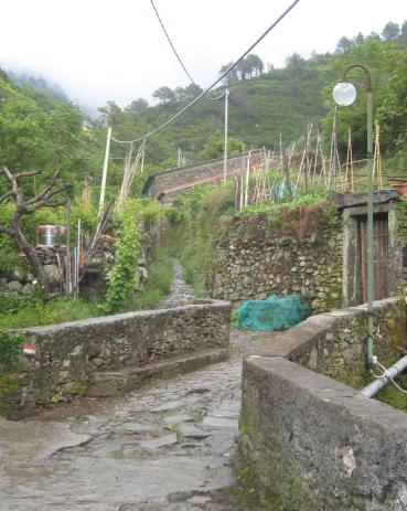 1520 Wet Winding Trail