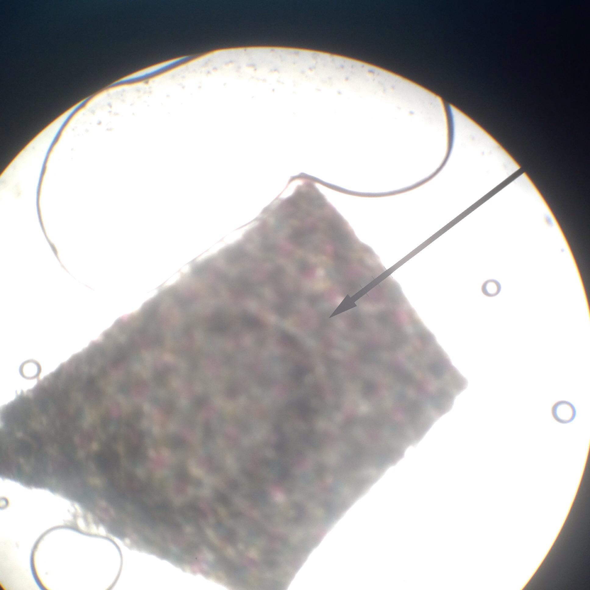 Letter E Microscope Lab Lab Activity The Compound Microscope 02 22