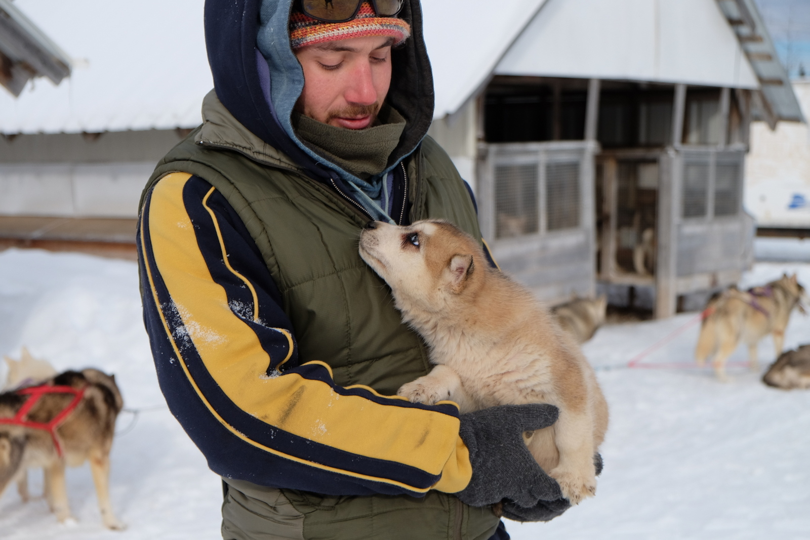 Try a dog sled ride in Charlevoix, Quebec. Yeah, the puppies are adorable. - JIM BYERS PHOTO