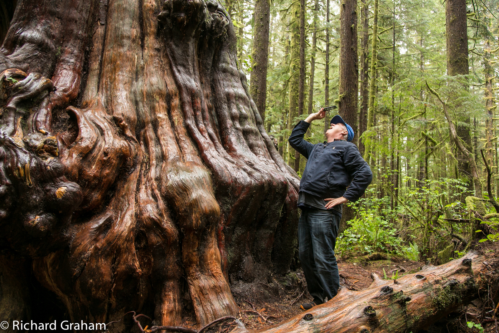 That's me checking out a massive tree in the Avatar Forest of B.C. - PHOTO BY RICK GRAHAM FOR BRITISH COLUMBIA TOURISM