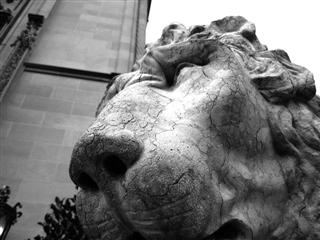 Biltmore House Lion (Thumb)