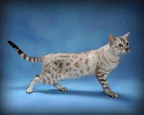 pet-cat-photographer-1
