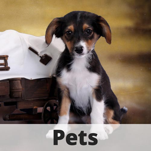 Pet Photographer Fort Lauderdale and Miami