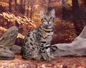 cat-portraits-pet-photography-10