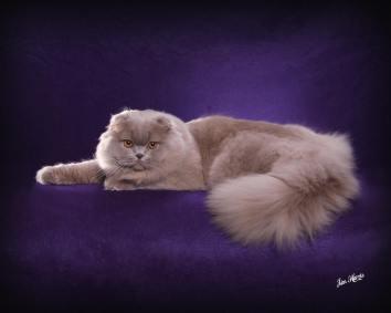 cat-portraits-pet-photography-4