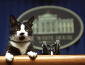 First Cat In A Dozen Years Set To Move Into White House After Biden Inauguration