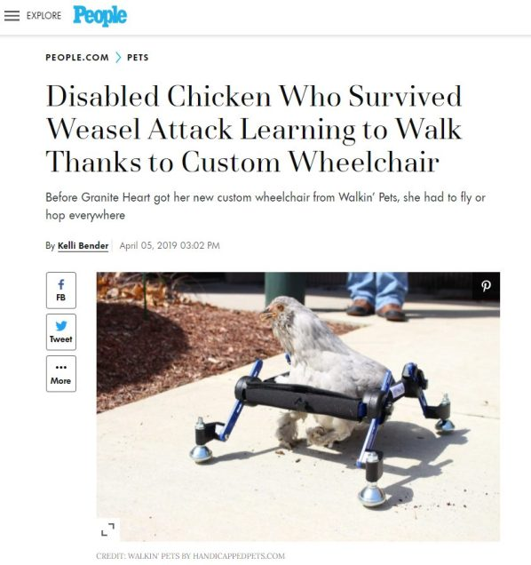 Wheelchairs For Chickens And Other Absurdities