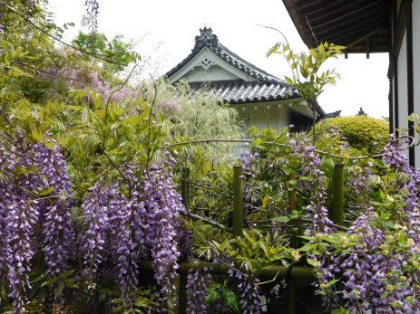 Wisteria graced the Tenryuji temple complex.