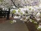 Tokyo Garden 004