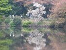 Tokyo Garden 008
