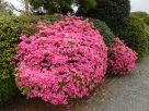 Tokyo Garden 033