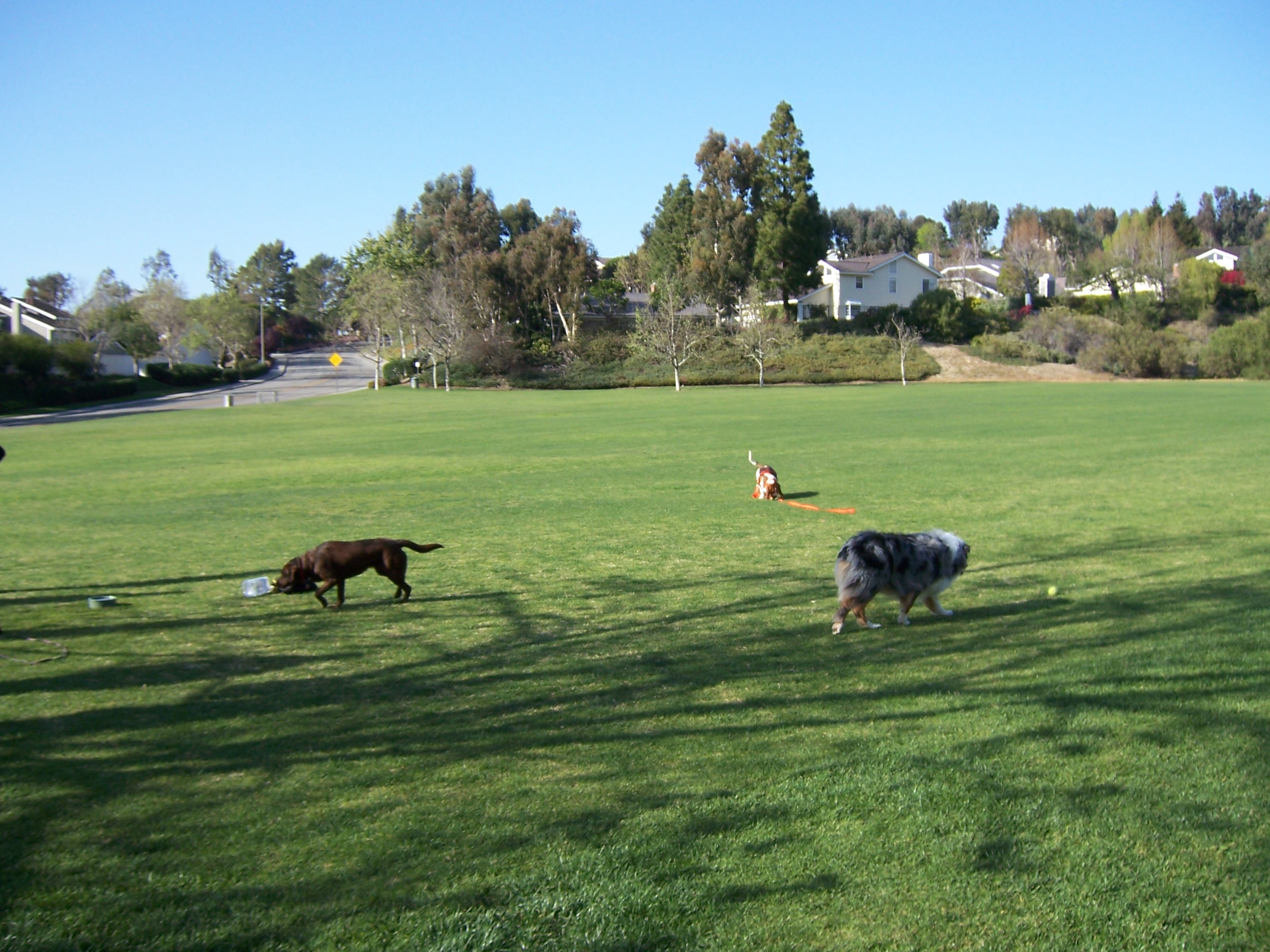 dogs in the park