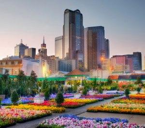 Dallas Flowers
