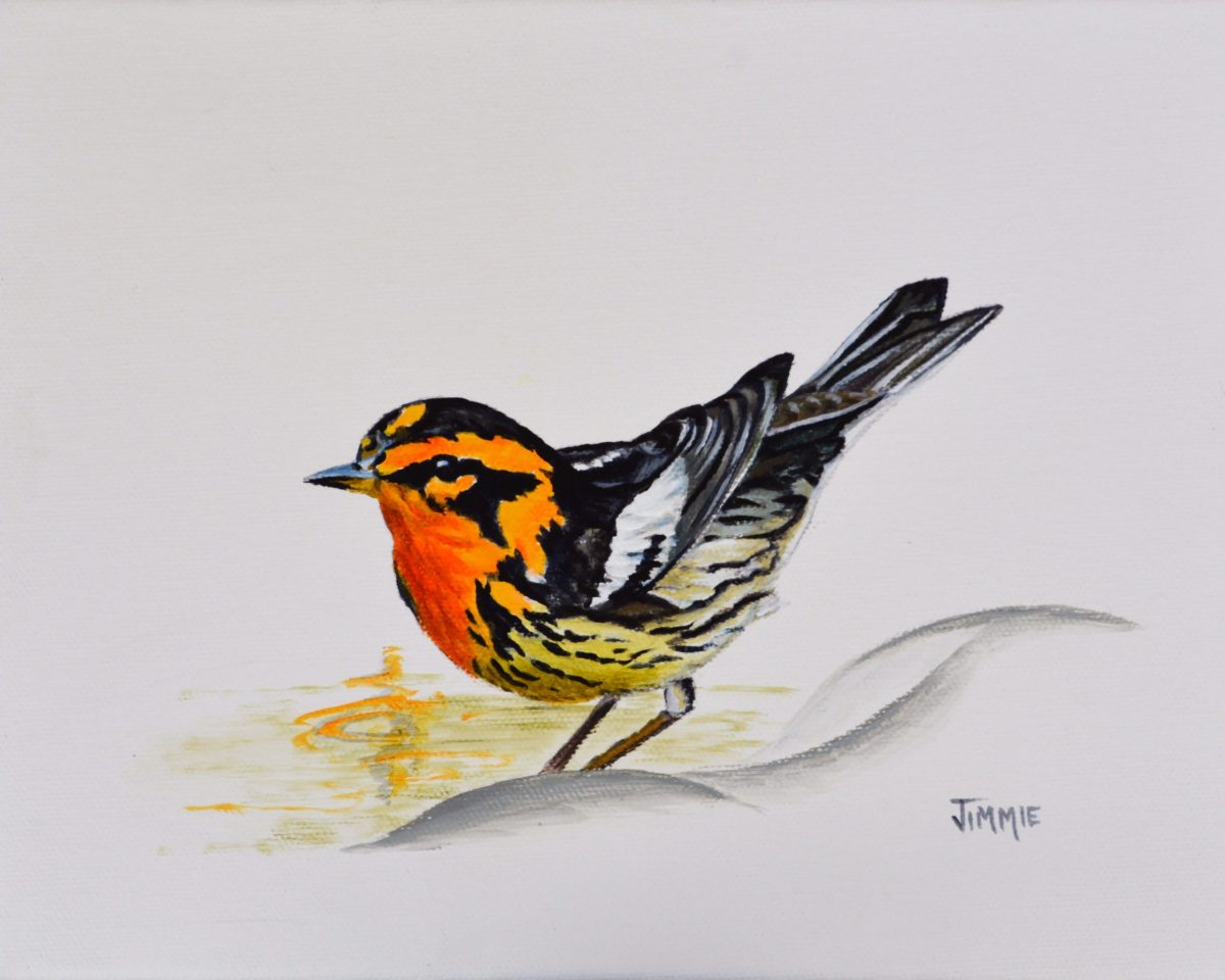 Black Burnian Warbler, original painting