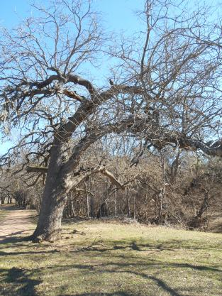 8-farm-mesquite-tree