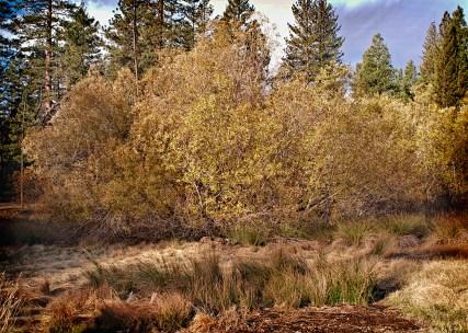 Meadow View II