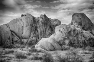 Classic look of Joshua Tree National Park in b and w