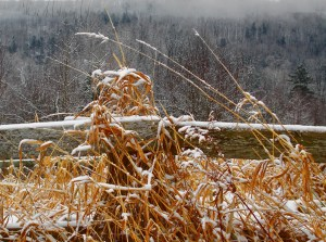 017-vermont-weeds-in-the-snow