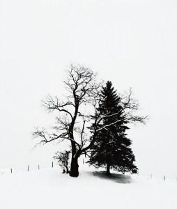 023-v-vermont-winter-trees