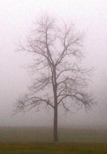 033-p-vermont-tree-in-fog