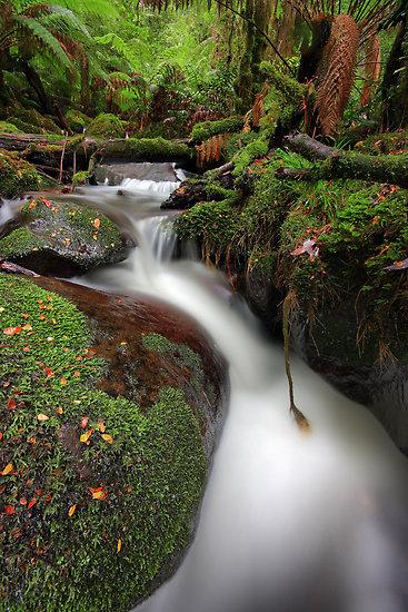 paradise-gully-cement-creek