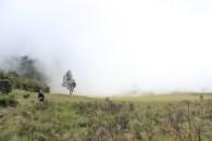 Kabut Bhhutak indah